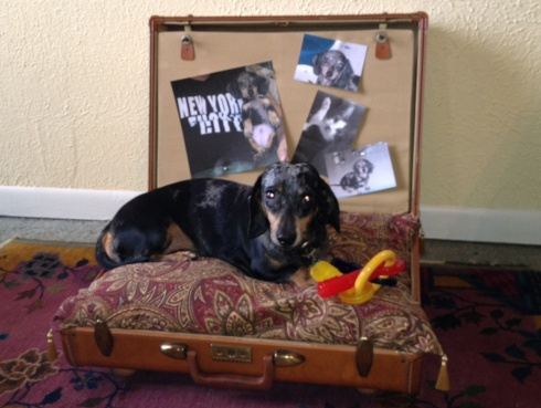SUITCASE PET BED-LUCA SETTLES IN