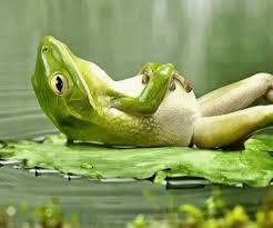 1-22-2014-resting frog