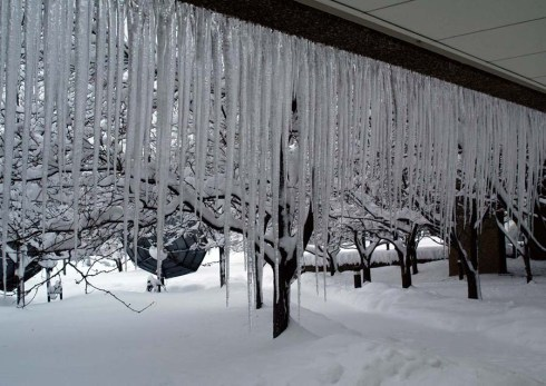 1-9-2013- icicles